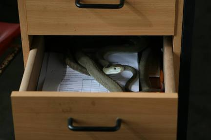mamba in drawer