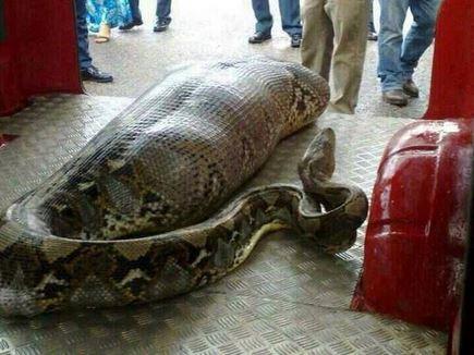 python fake